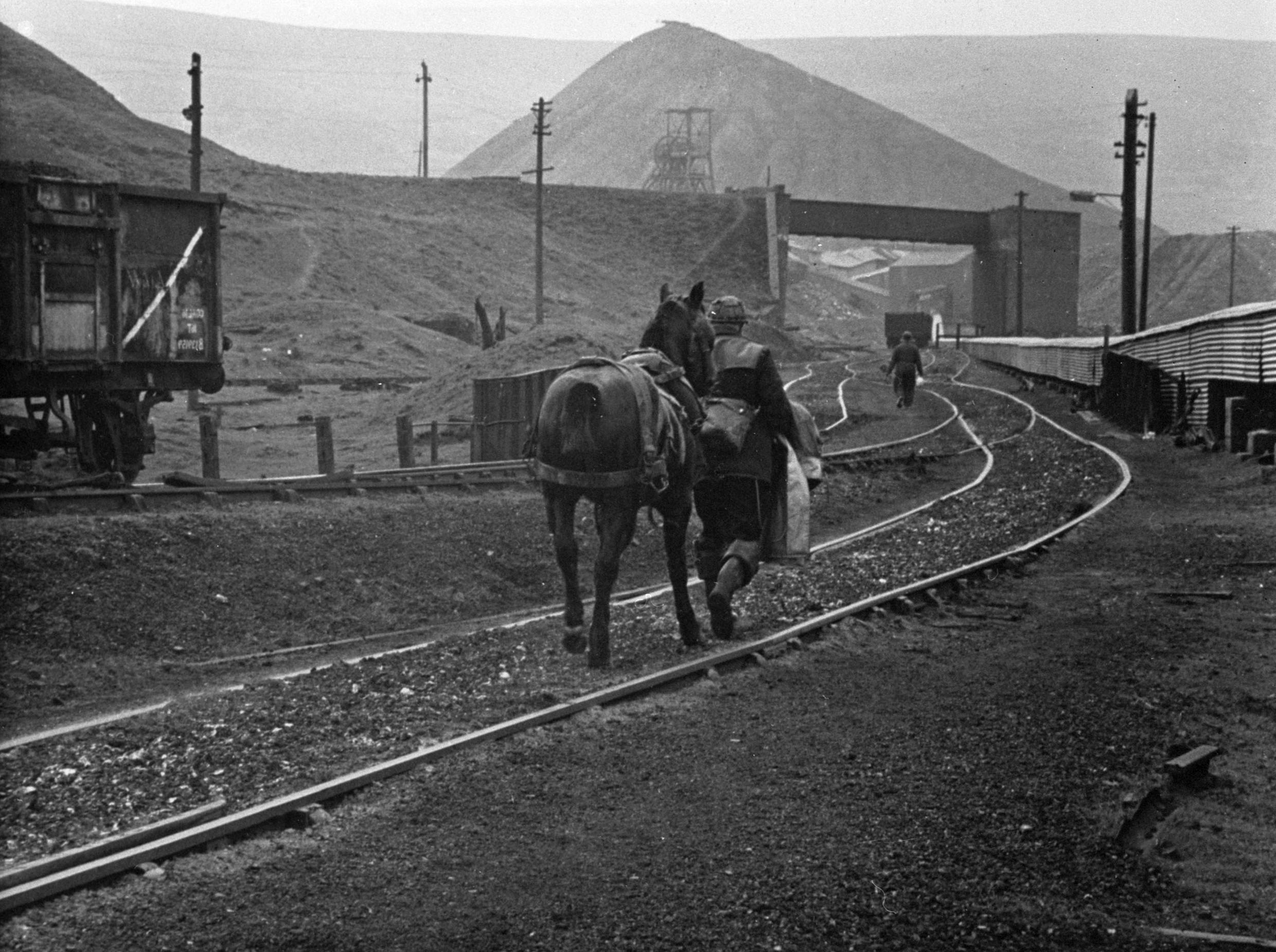 Colliery horse returning to Big Pit surface stables from the Washery in 1968.