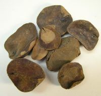 Kola nuts, the original ingredient of the medicinal Coca Cola of 1886