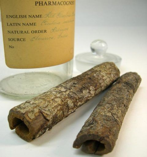 <em>Cinchona</em> bark from Tropical South America, containing anti-malarial quinine.