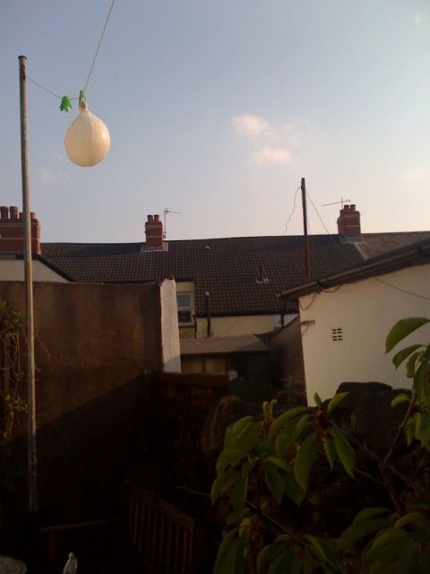 A pig's bladder football hanging on a washing line