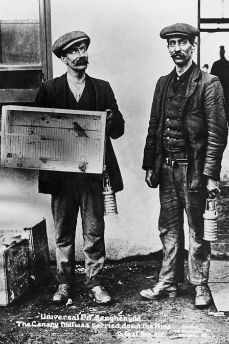 Canary that was used to test the air at the 'Universal' pit disaster, 1913