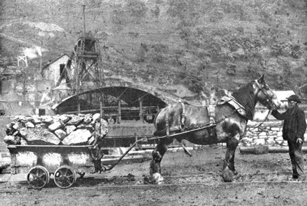 Pit Pony and Tram: Ferndale Colliery in 1907 (b/w photo)