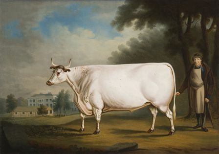The White Ox on Nannau 1824 (oil on canvas)