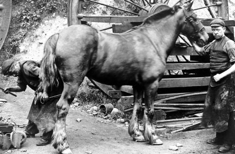 Blacksmith shoeing a horse at Lewis Merthyr colliery, c1910 (b/w photo)