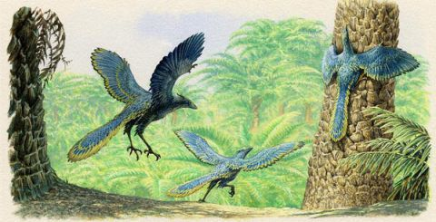Reconstruction of Archaeopteryx. © J. Sibbick