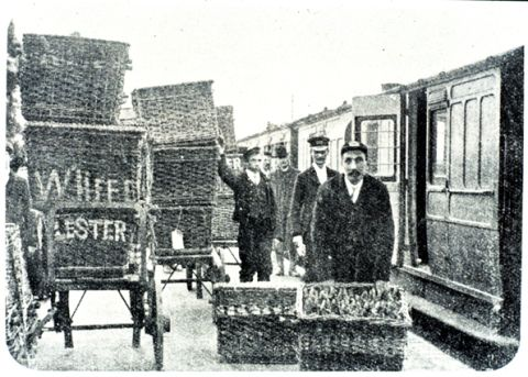 Baskets of rabbits being loaded onto a train c.1930