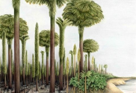 Reconstructed view of late Carboniferous coal swamps of South Wales.  Artwork by A. Townsend.