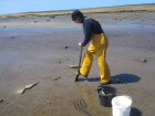 2. Digging for worms on the shore