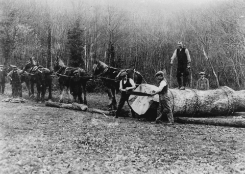 Forestry was another important local industry which Tom Mathias diligently recorded.