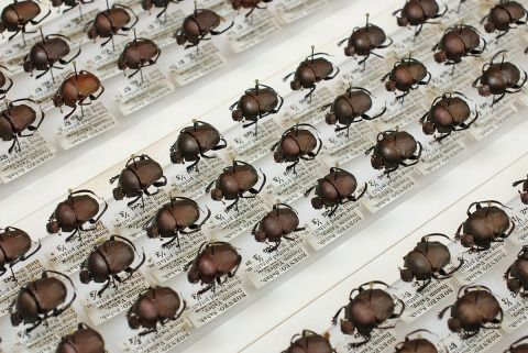Beetles from the AC-NMW BioSyB collection.