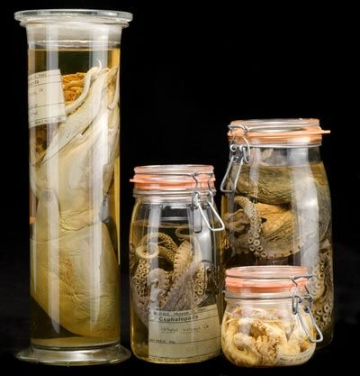 Fluid preserved specimens over a hundred years old and are a potential source of DNA studies.