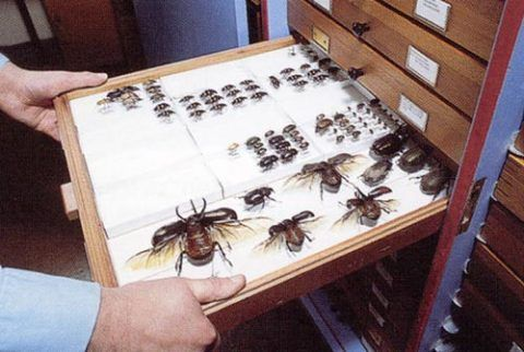 Historic insect collections are a valuable source of future genetic studies.