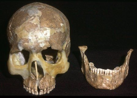 The skull of burial 5.