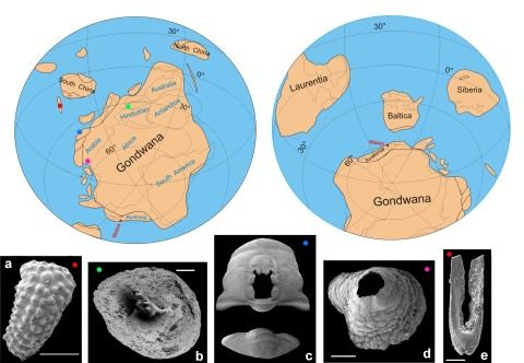 Earth about 530 million years ago, shortly after the Gondwanan supercontinent formed