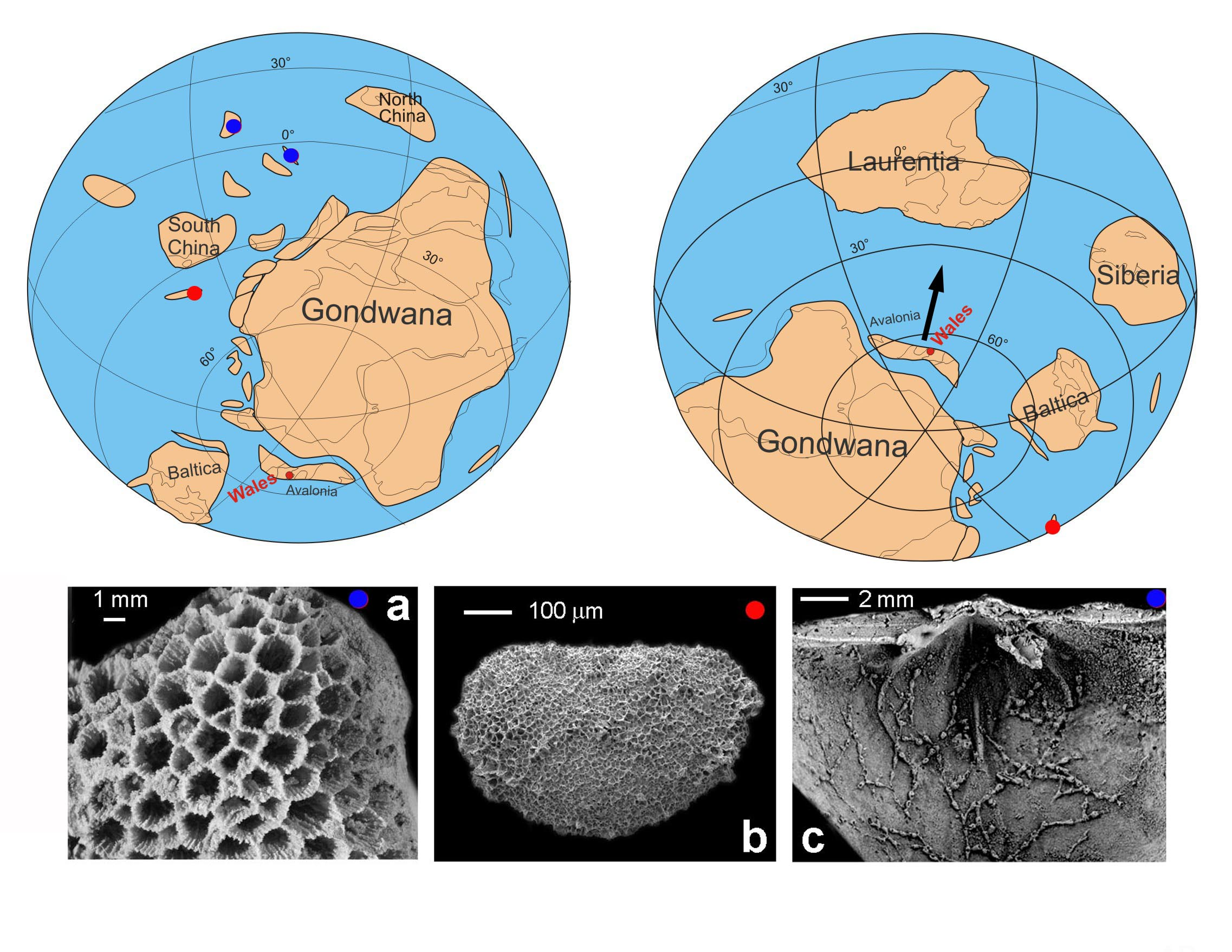 About 480 million years ago, Avalonia separated from Gondwana