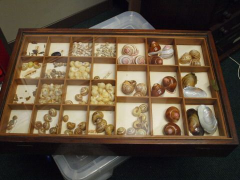 Brecknock Museum Collections Review
