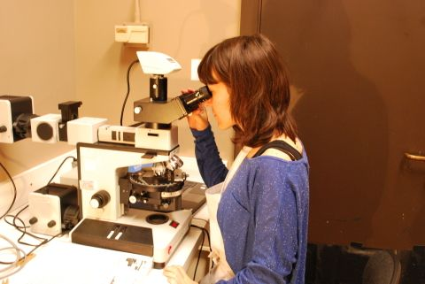 Working with the microscope at painting department
