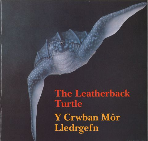 The leatherback turtle