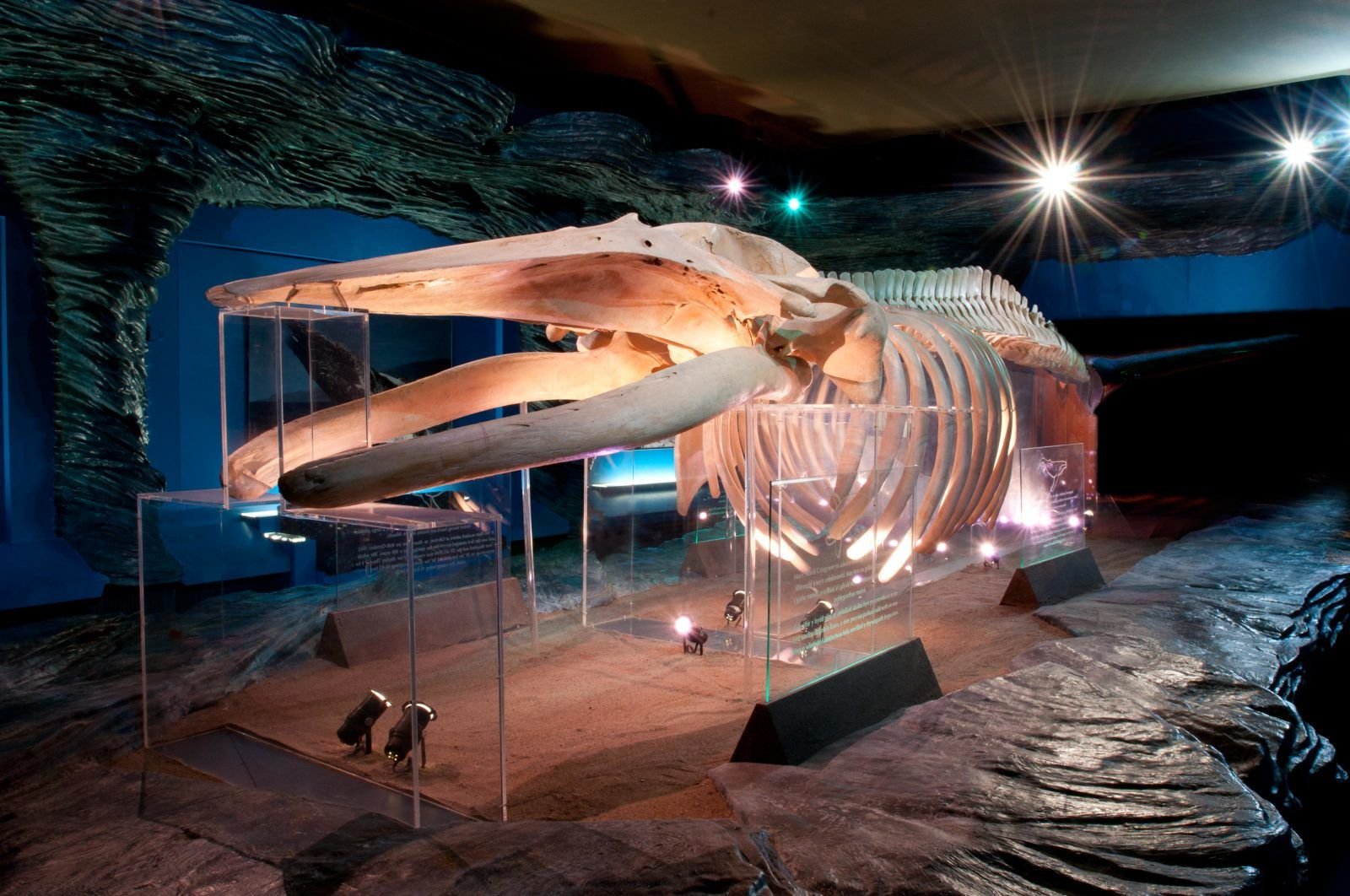 Humpback Whale at National Museum Cardiff