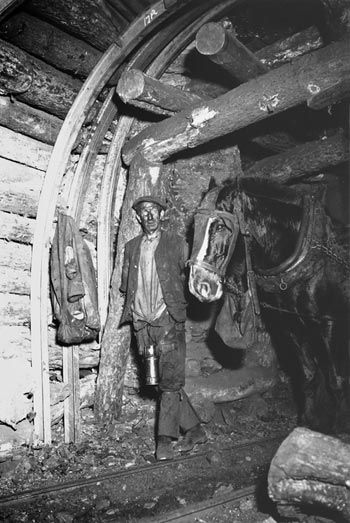 Pit Horse at Work, 1/2 mile underground at Penallta.