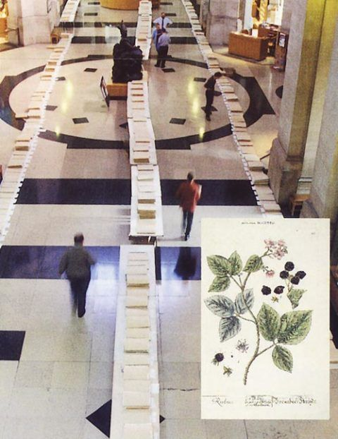 Bramble specimens laid out along the length of the Main Hall of the National Museum, Cardiff.