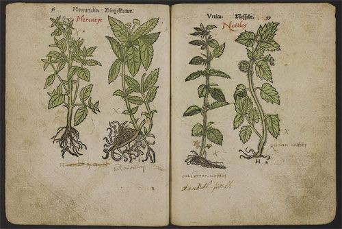 Part of an early German herbal annotated in Welsh and English, once in the possession of Morris Owen