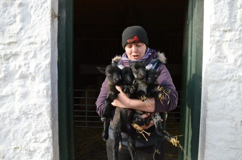 The St Fagans shepherd, with the first set of quads ever to be born at the museum