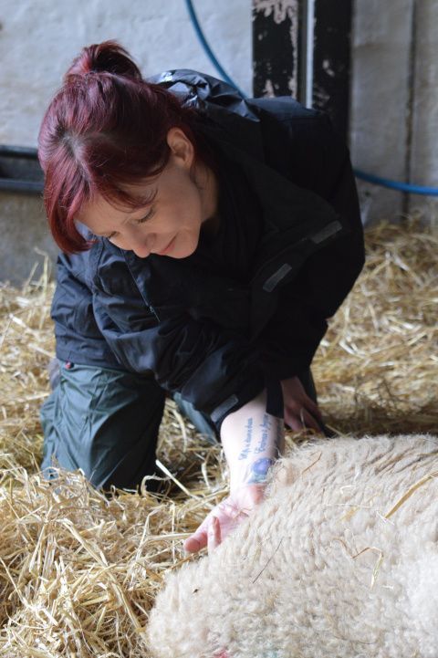 Lambing Experience Days at St Fagans