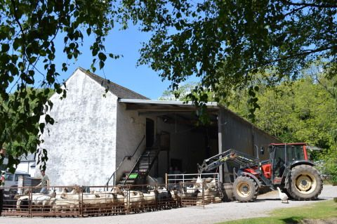 Shearing at St Fagans