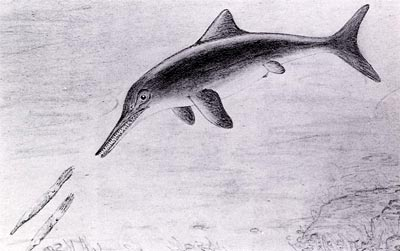Reconstruction of an ichthyosaur chasing its squid-like prey
