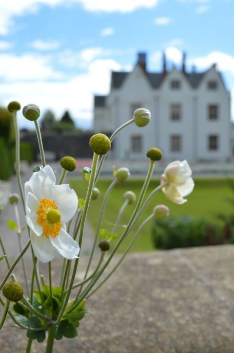 A picture of a flower in front of St Fagans Castle