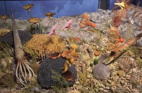 image of silurium reef