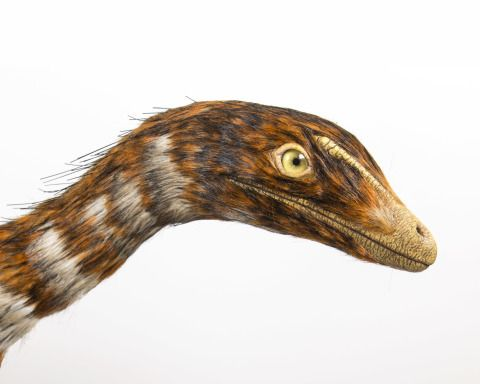 The head of the dinosaur model