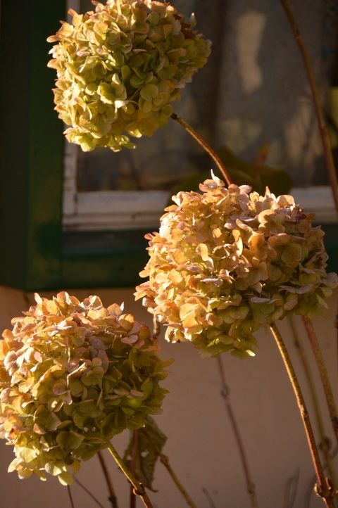 Image: dead flowers in winter
