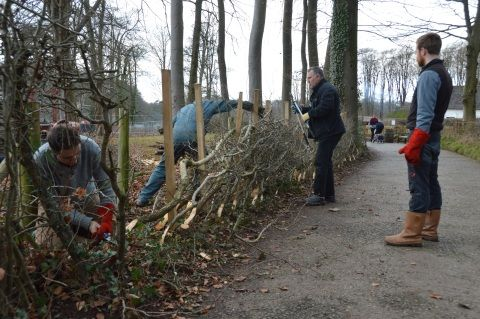Image: Hedgelaying course at St Fagans National Museum of History