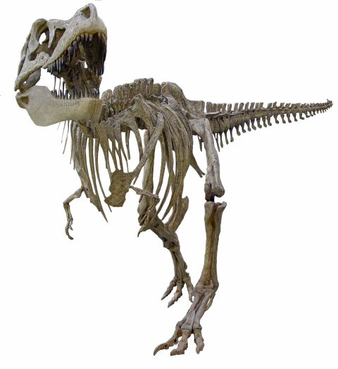 image of tarbosaur skeleton
