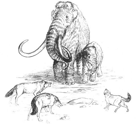 A black and white sketch of a mother mammoth defending her baby from wolves
