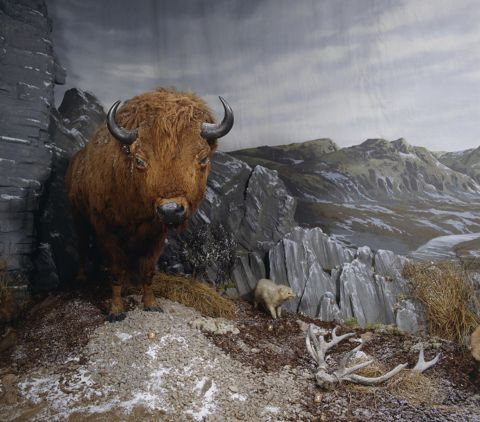 Photograph of museum diorama showing bison and other ice age animals