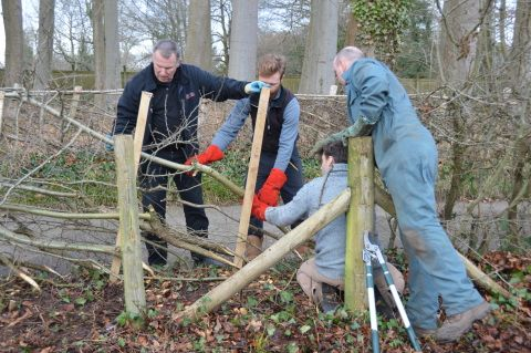 image;hedgelaying