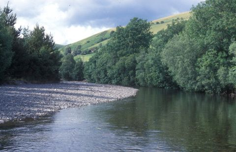 conservation in the river Wye