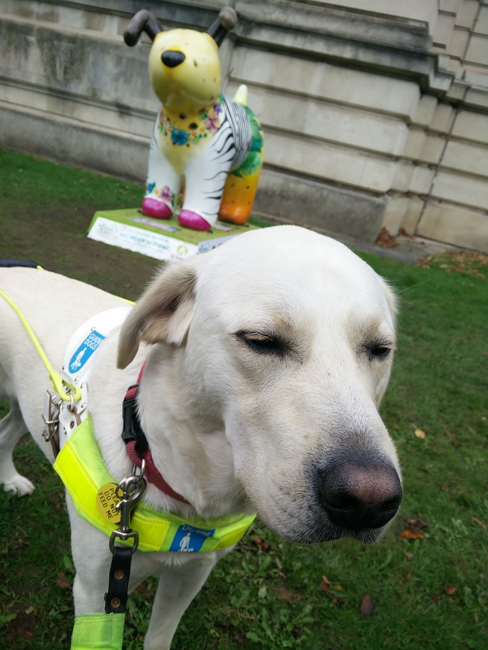 Guide Dog Uri with a Snowdog in the background, outside National Museum Cardiff