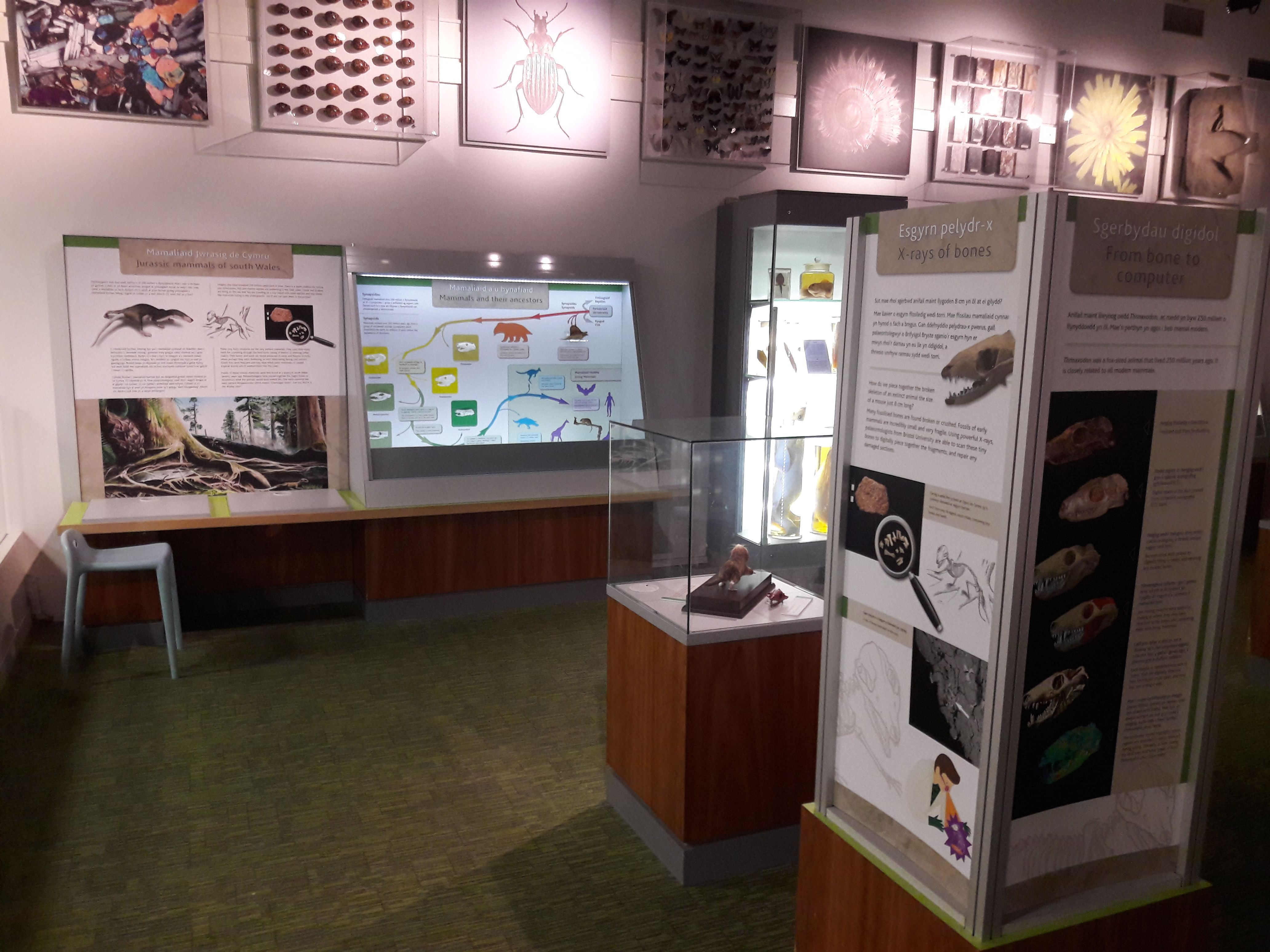 The display in the Insight Gallery at National Museum Cardiff
