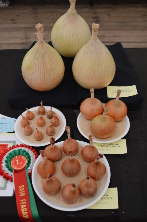 Image: a display of onions