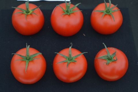 image: a display of tomatoes