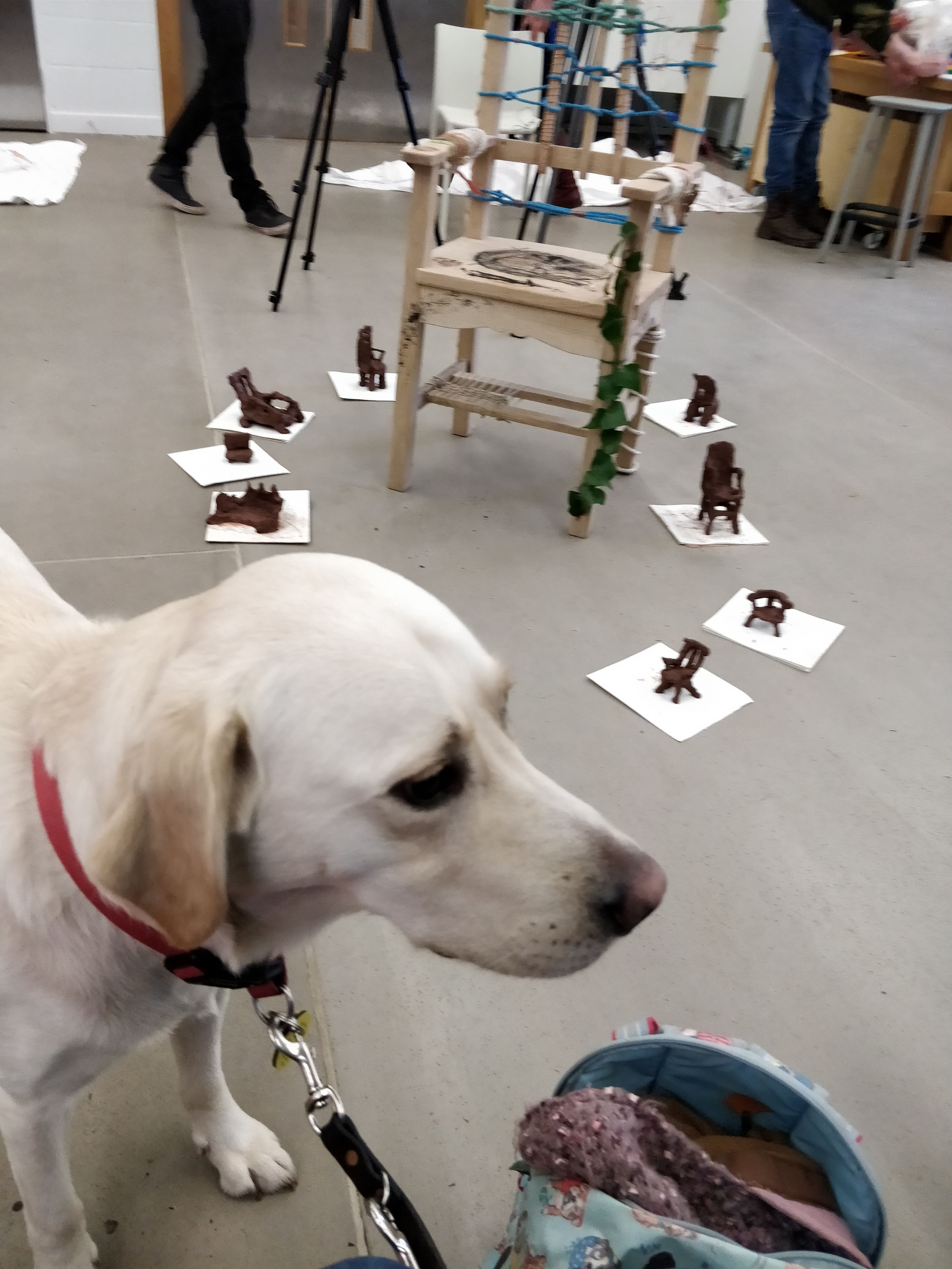 Guide Dog Uri with some hand-crafted chairs in the background