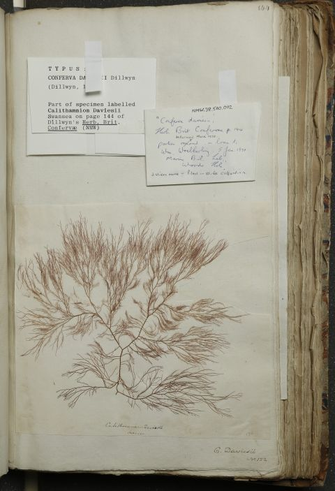exsiccatae specimen - paper with dried plant attached