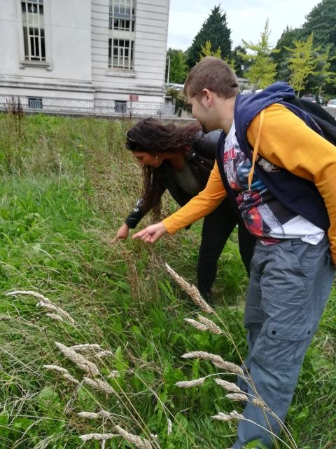 Photograph of two people hunting for invertebrates on the Museum's Urban Meadow