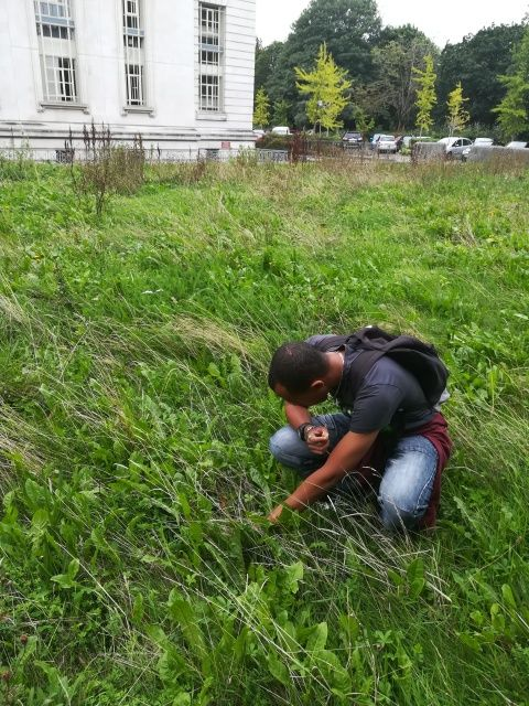 Photograph of a person hunting for invertebrates on the Museum's Urban Meadow