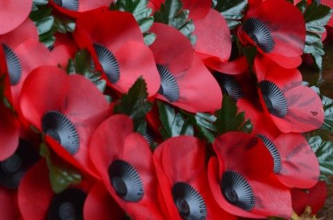 Image: Poppies for Remembrance