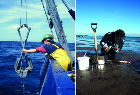 Museum staff collect specimens both onshore and offshore